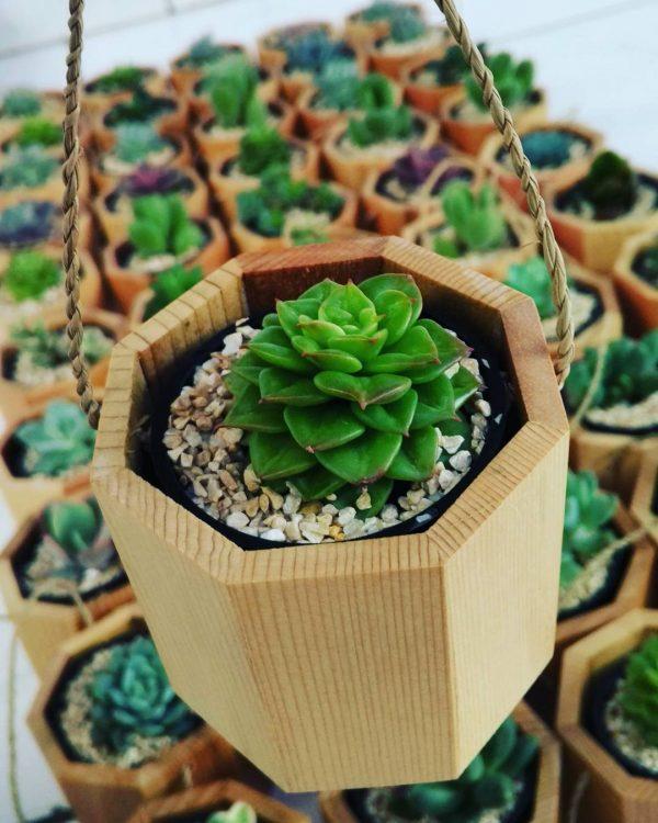 Souvenir Tanaman Hias kaktus