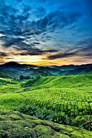 Sunrise in Cameron Highlands