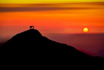 """""""Nomad's Sunset"""" Image courtesy and copyright Mojaa Neddo"""