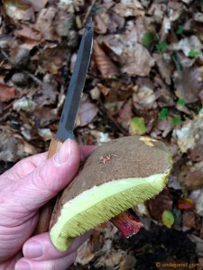 Red Cracking Bolete (Boletus Chrysenteron).