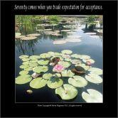 Pond Lilies - Nicole Huguenin