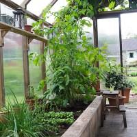 Utsikt från min korgstol i växthuset!