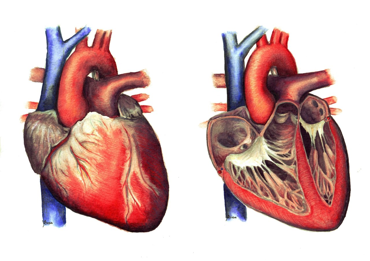 Why does cardiac muscle does not show Tetany !!!!