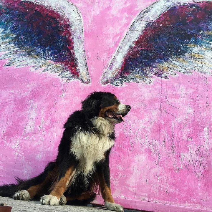 Angel Dog @colettemiller