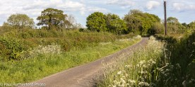 A typical Pembrokeshire back-road seen in the early evening sunshine