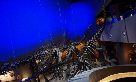 LKCNHM Part Two! Jurassic Edition