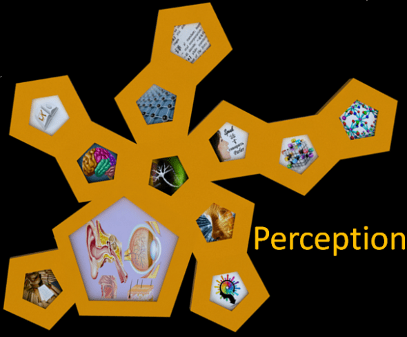 Perception Section