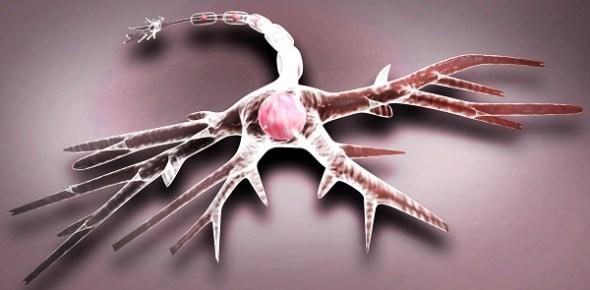 Neuron 3D
