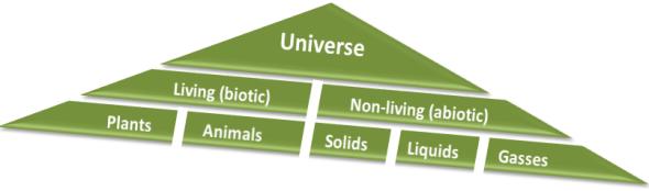Universe Biotic Abiotic Taxonomy