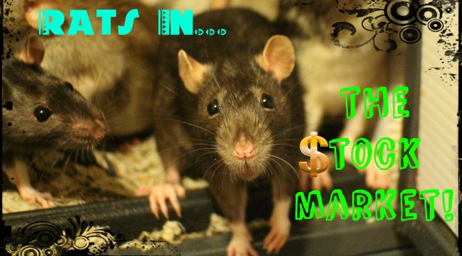 Are Pet Rats the Future of the Stock Market???