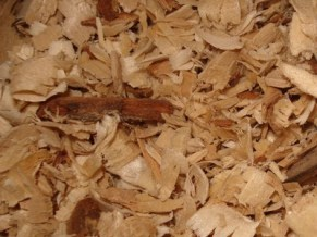 Wooden shavings can be dangerous for pet rats. Cedar shavings are toxic and deadly. Pine and other wood shavings can contain large amounts of dust, and may cause potentially severe respiratory distress depending on the animal's sensitivity.