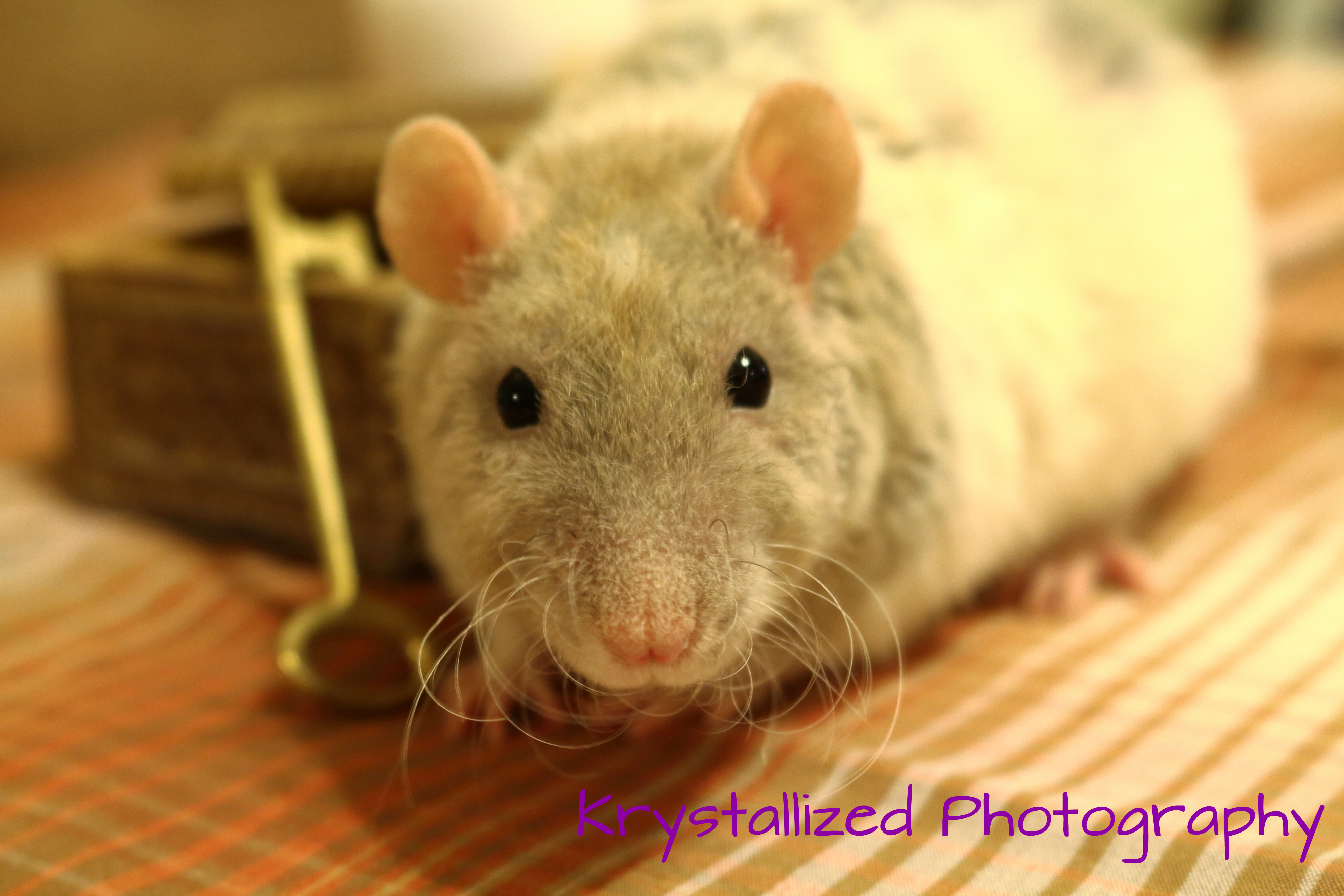 Is rat poison bad for dogs? Protect your pets from ...  Rat Vomit