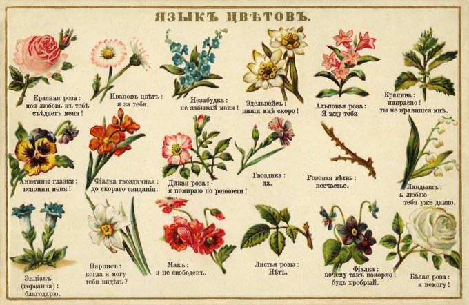 Flower language