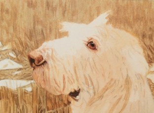 dog painting commission spinone italiano by rachelle siegrist - 3