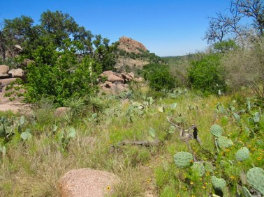 enchanted rock cacti