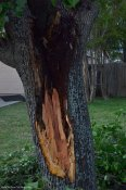 A big limp got ripped out of the ornamental tree.