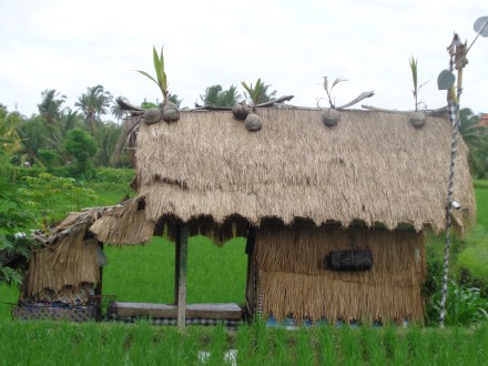 Old lady house in the rice paddies, Ubud
