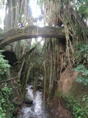 The gorge in Monkey Forest