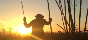 A sugar cane worker raises his blade with the sun behind him in El Salvador.