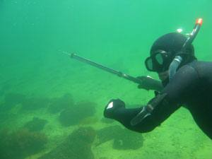 Harpun - Harpun til undervandsjagt