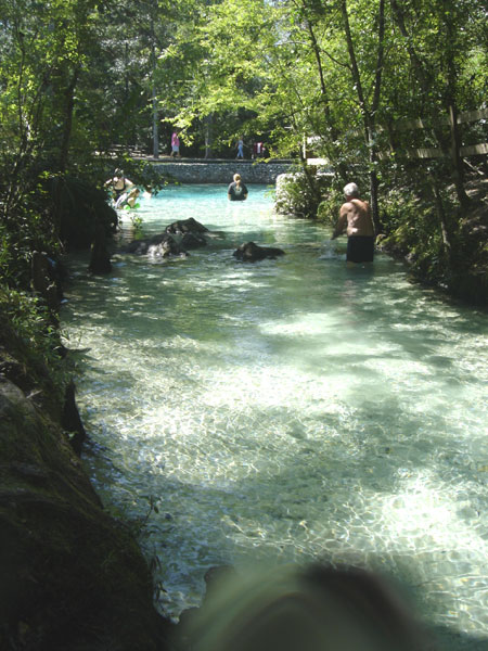 Pitt Spring Snorkel This Freshwater Spring On The