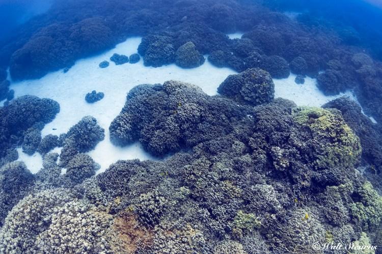 Coral reef bottom inside the bay at Pu'uhonua O Honaunau