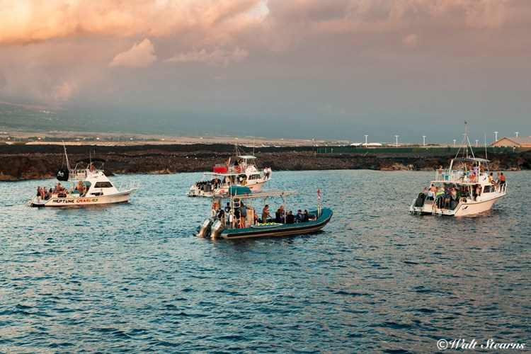 As the sun begin to set, divers and snorkelers in the neighboring dive boats prepare to get in the water for the nighttime show.