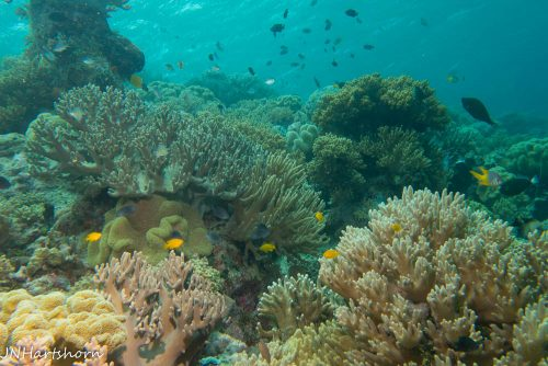 shallow reef, Wakatobi