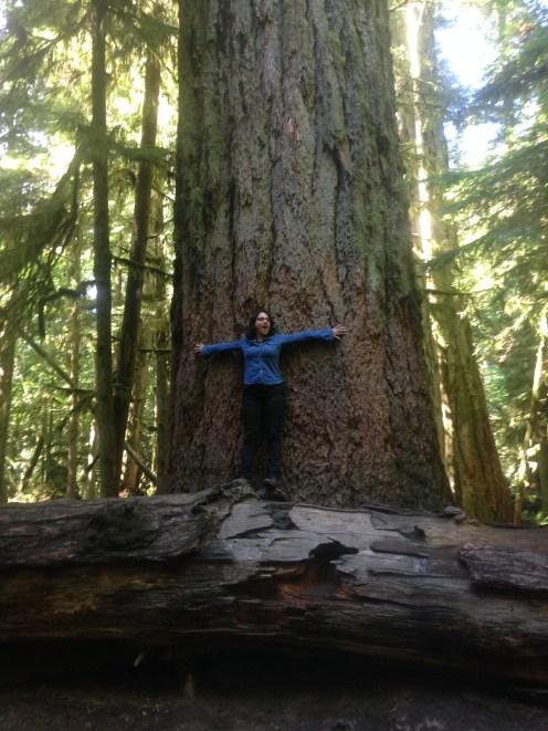 IMG_0476 BIG TREE