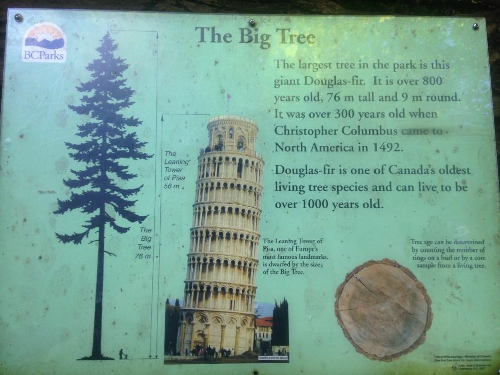 IMG_0488 BIG TREE