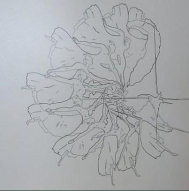 Georgina Lipsey, Metamorfosis, tinta sobre papel