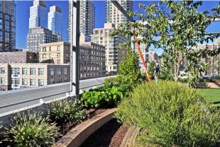 Kate Orff,SCAPE. Gruzen Samton Architects. Abraham Joshua Heschel School. NY, EUA. 2014.