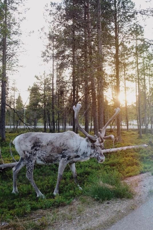 Laponie/Finlande