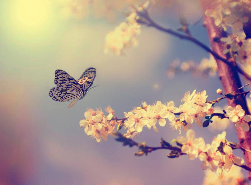 Envol papillon epanoui chenillle