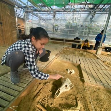 archéologie (16)