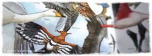 Livre à vol d'oiseau