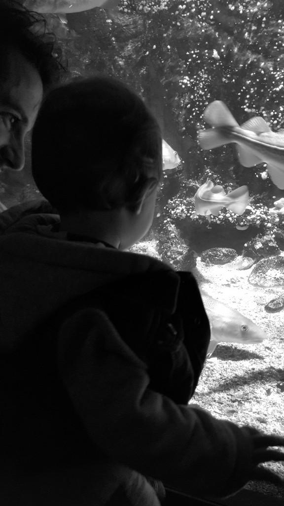 Sortie bébé aquarium