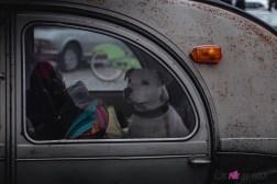Photo Traversée de Paris hivernale 2021 chien voiture