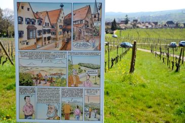 Sentier viticole de Mittelbergheim