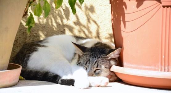 L'île aux 1000 chats - Corfou