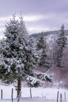 lac_blanc-46
