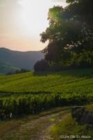 Un soir d'été au Muenchberg à Nothalten