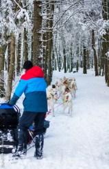 Mon baptême en chien de traîneau - Photos Céline Schnell - Une Fille En Alsace