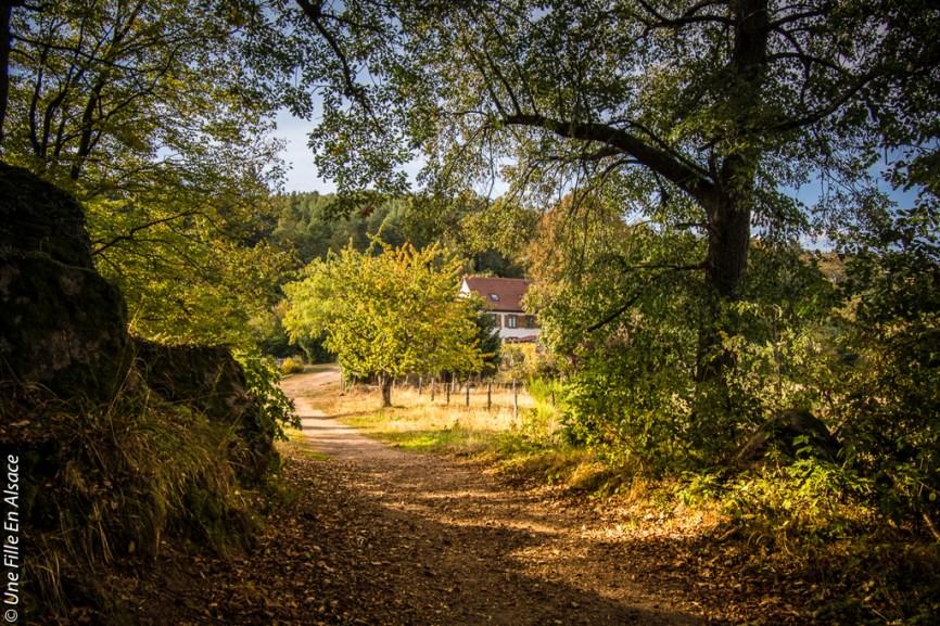randonnee-chateau-spesbourg-andlau-b©Celine-Schnell-Une-Fille-En-Alsace-5