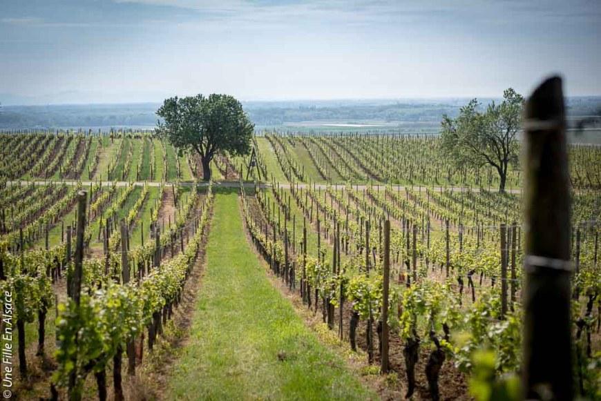 vue sur le vignoble et la plaine d'Alsace Mittelwihr photo ©Celine-Une-Fille-En-Alsace-2019-8