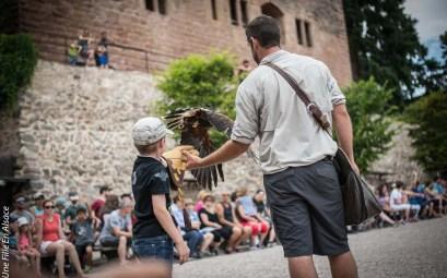 volerie-des-aigles-kintzheim©Celine-Schnell-Une-Fille-En-Alsace-2019-15