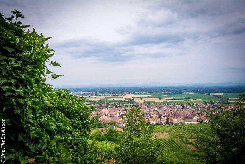 volerie-des-aigles-kintzheim©Celine-Schnell-Une-Fille-En-Alsace-2019-18