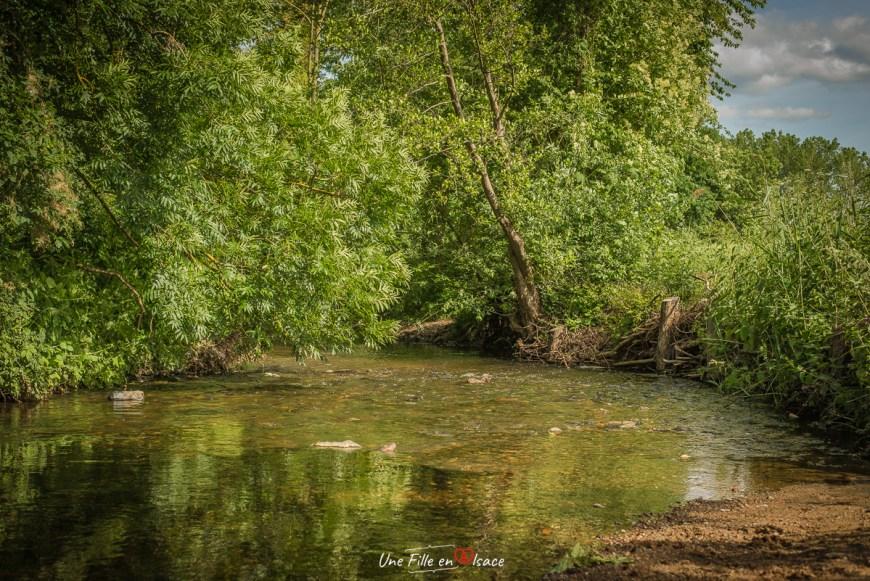 riviere-ehn-obernai-niedernai@Céline-Schnell-Une-Fille-En-Alsace-2020
