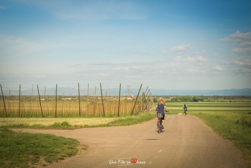vélo-houblonnières-obernai@Céline-Schnell-Une-Fille-En-Alsace-2020