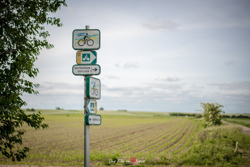 velo-krautergersheim-capitale-de-la-choucroute@Céline-Schnell-Une-Fille-En-Alsace-2020